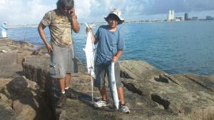 nice Kingfish little dude!